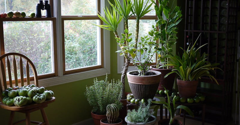 The 9 Best Indoor Plants To Buy in 2020 | The Manual